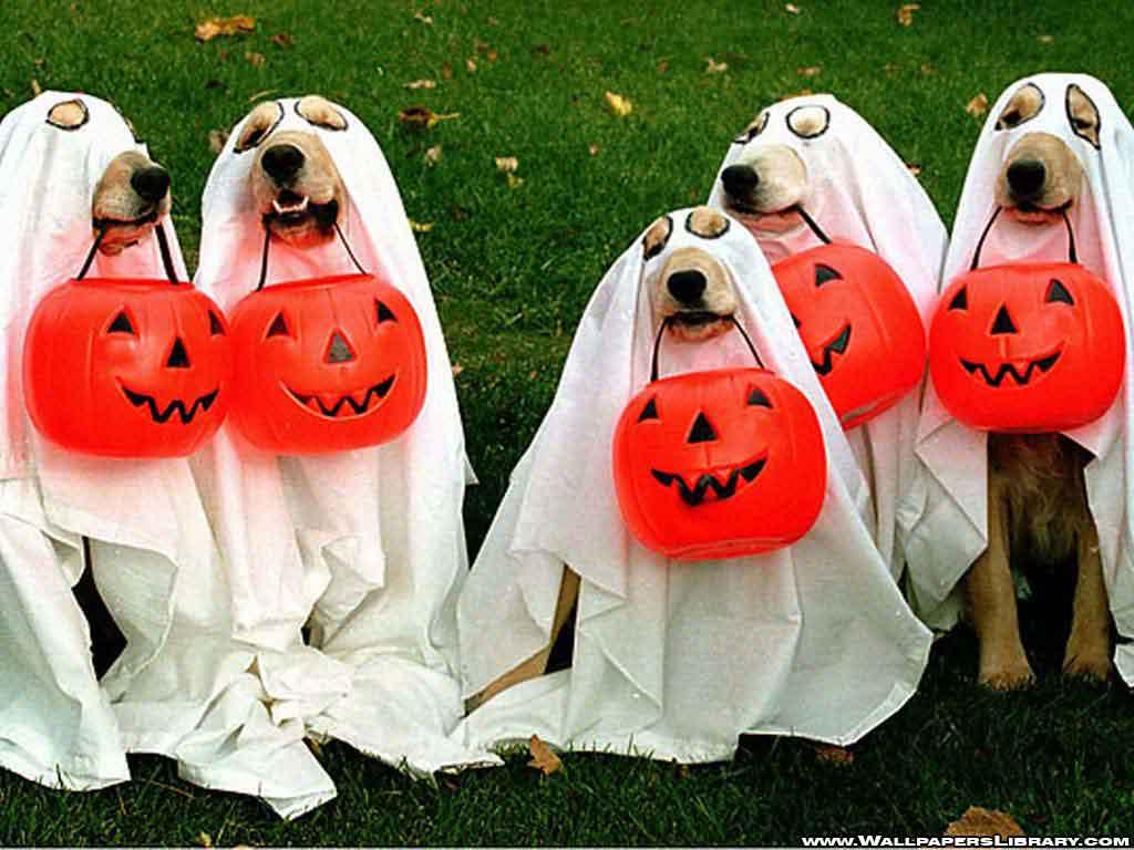 Halloween Costume Memes